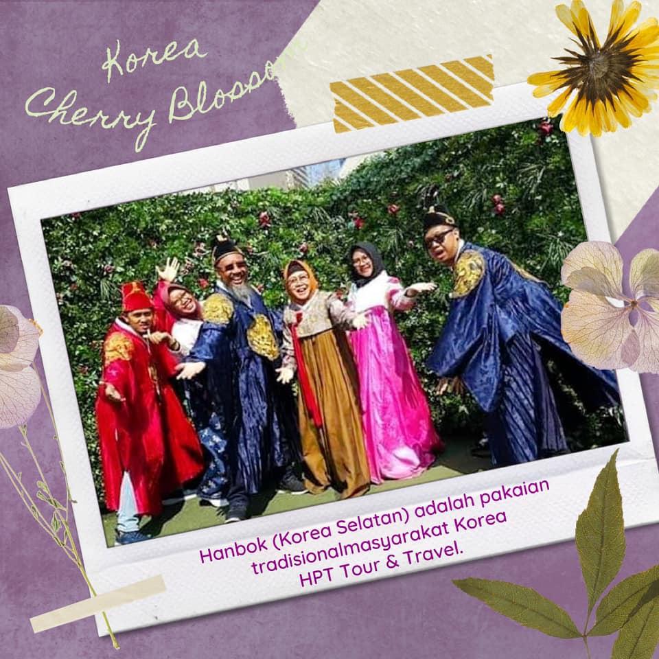 hpttourtravel-korea-cherry-blossom