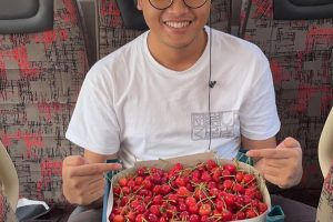 hpttourtravel-panen-buah-cherry-004